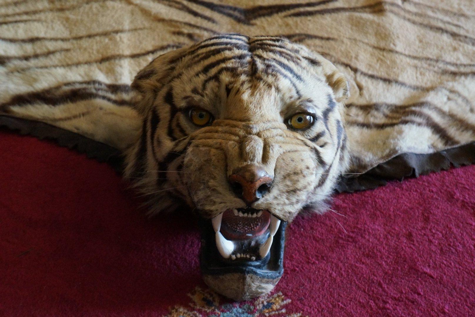 Casa Loma - Tiger